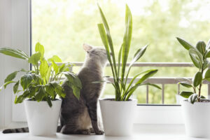 Do You Take Care Of Yourself Like You Do Your Pets and Plant?